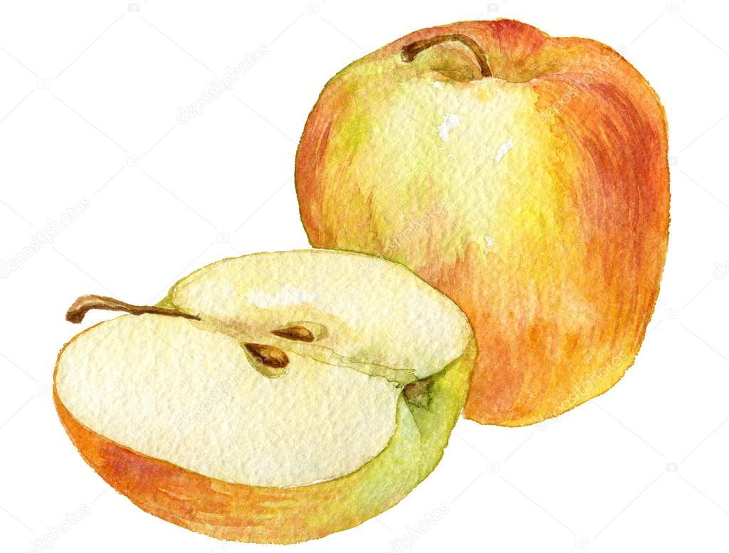 Tüm Elmayı Ve Yarısı Tarafından Suluboya Resim çizme Stok Foto