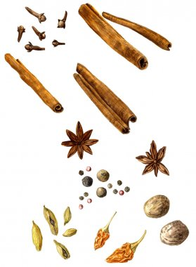 set of spice, drawing by watercolor