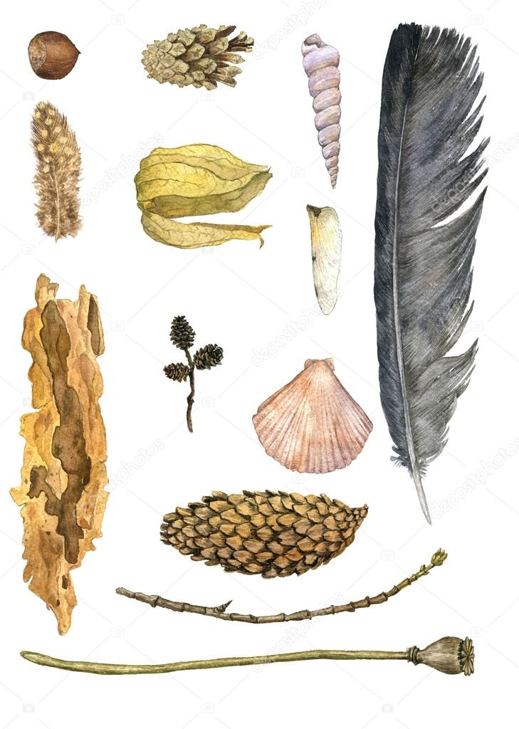 watercolor set of nature objects