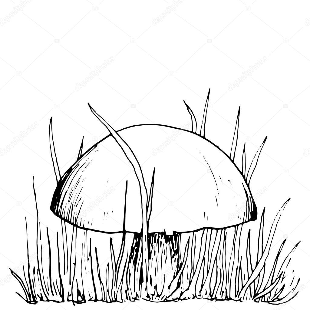 Top inkt tekenen musroom en gras — Stockvector © cat_arch_angel #83502312 HX74