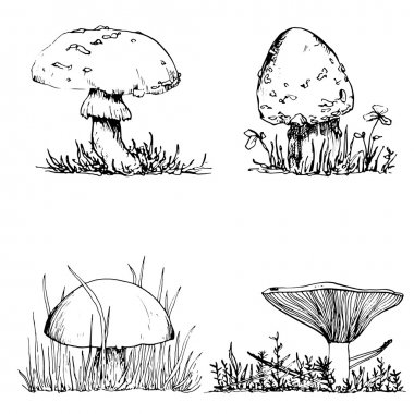 ink drawing mushroom and grass