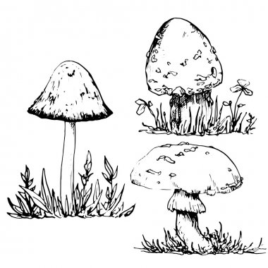 ink drawing poisonous mushrooms and grass