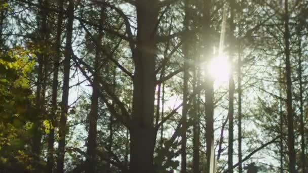 Slunečního světla mezi stromy v lese, střílel z jedoucího auta.