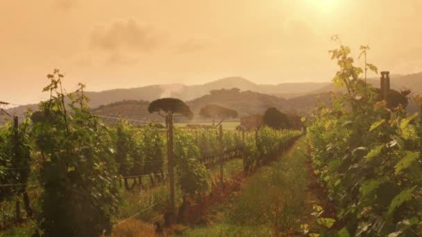 vinice s horami na pozadí při západu slunce
