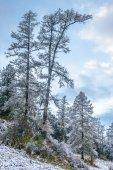 neve sul passo di montagna