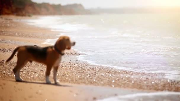 štěně přichází na pláži