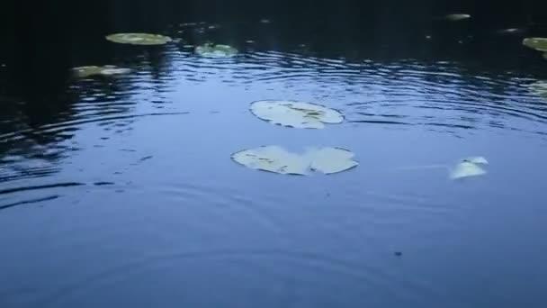 Padající kapky do jezera s listy lilie