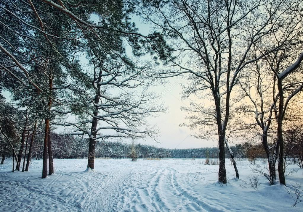 winter forest park in snow at evening