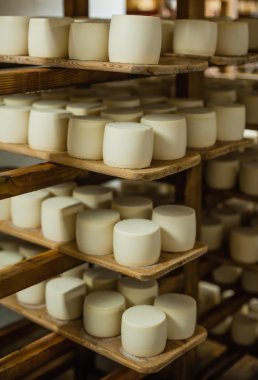 wheels of cheese in a maturing storehouse
