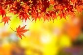 Fotografie barevné podzimní listí