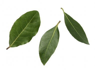 three leaves of laurel on a white background