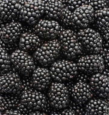 blackberries photographed in the studio