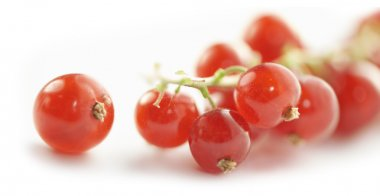 Single ripe red currant close up