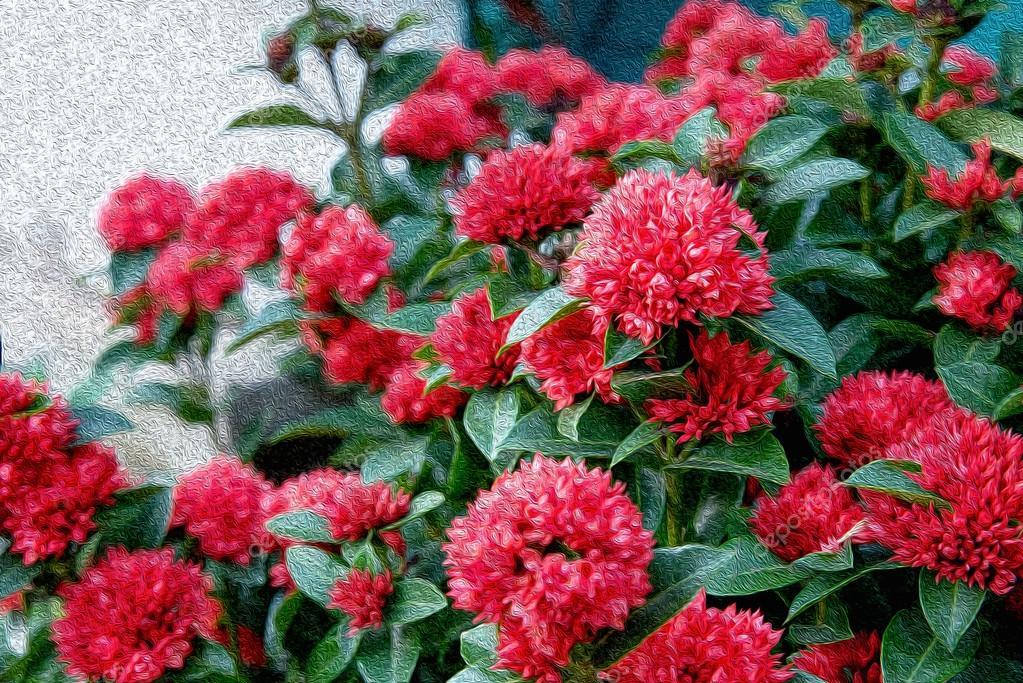Muitas vezes Óleo pintado imagens de flor vermelha nome Ixora chinensis Lamk  LS71
