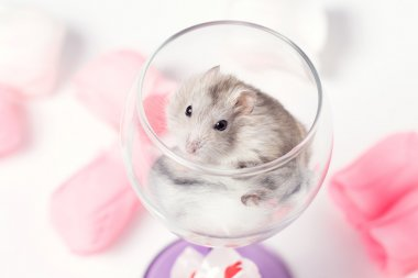 cute couple of hamsters in a glass
