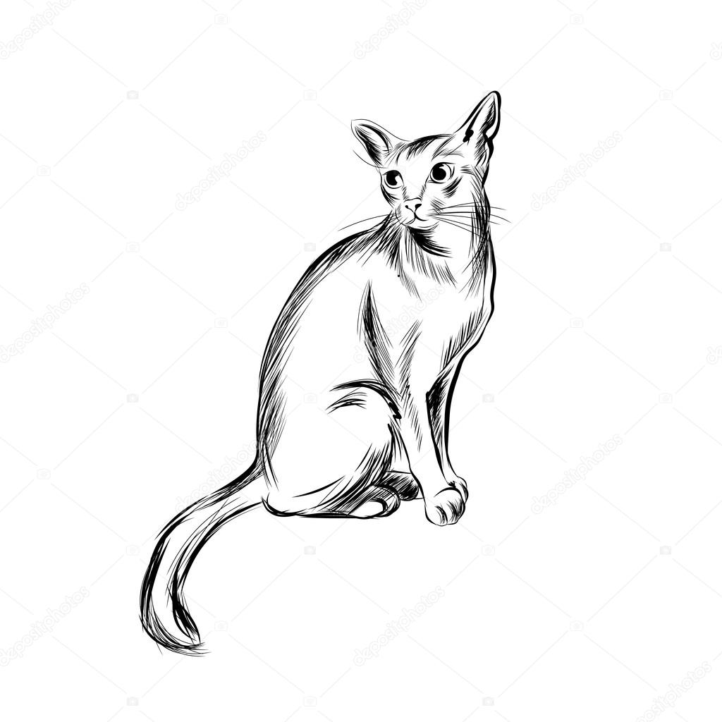 Katze-Skizze, handgezeichnete Vektor-illustration — Stockvektor ...