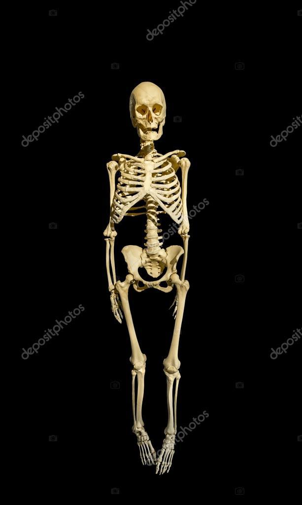 Das Skelett eines Mannes auf schwarzem Hintergrund isoliert ...
