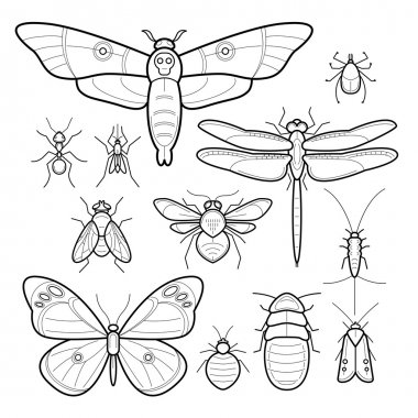 Set of vector insects image.