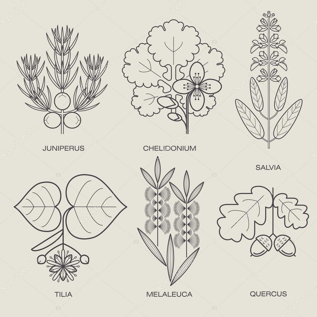 Set of medical plants.