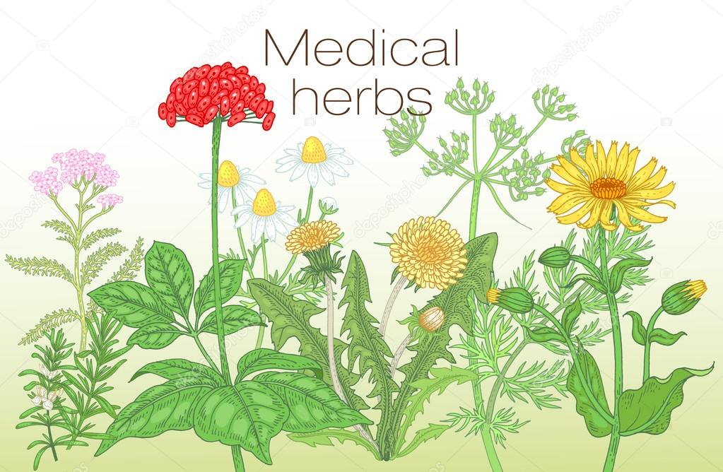 Vector template poster with the image of medicinal herbs.