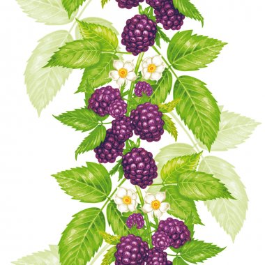 Vector seamless floral pattern with blackberry.