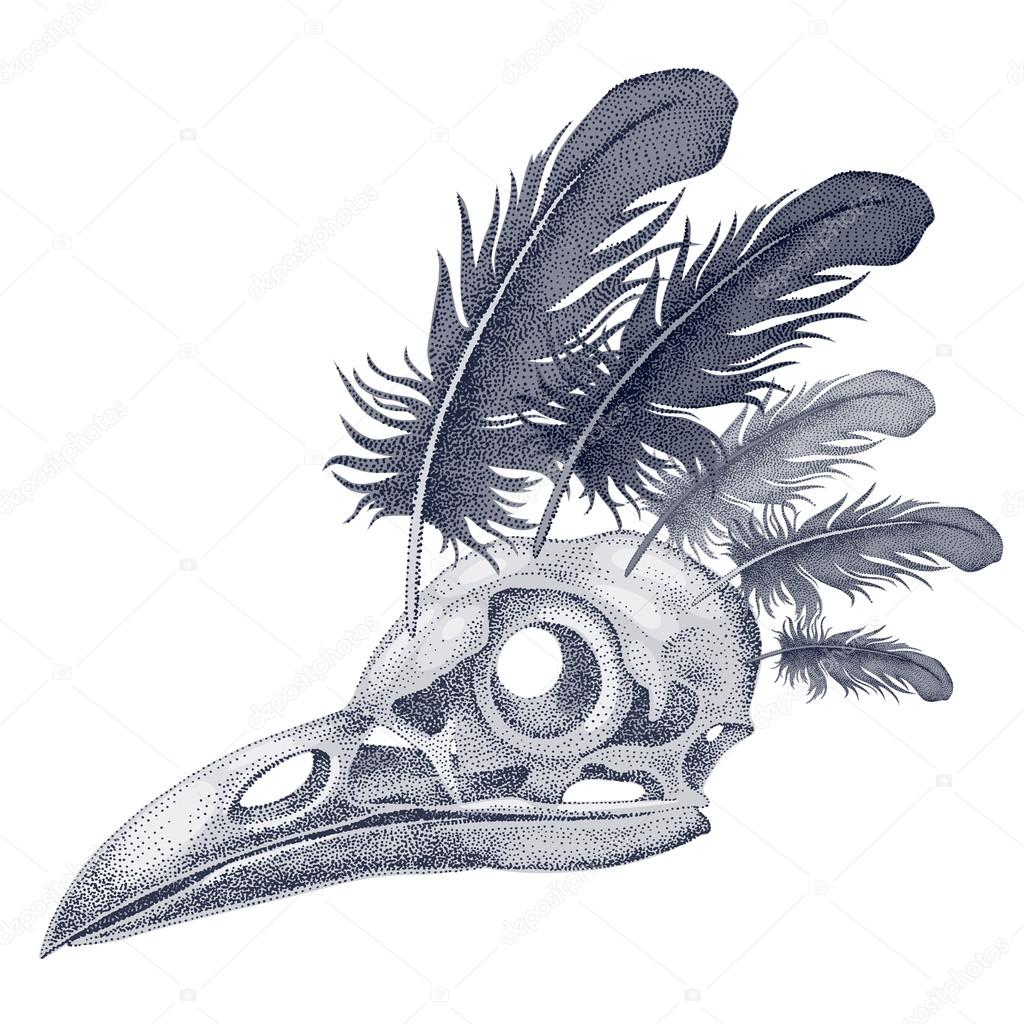 Illustration skull crow.