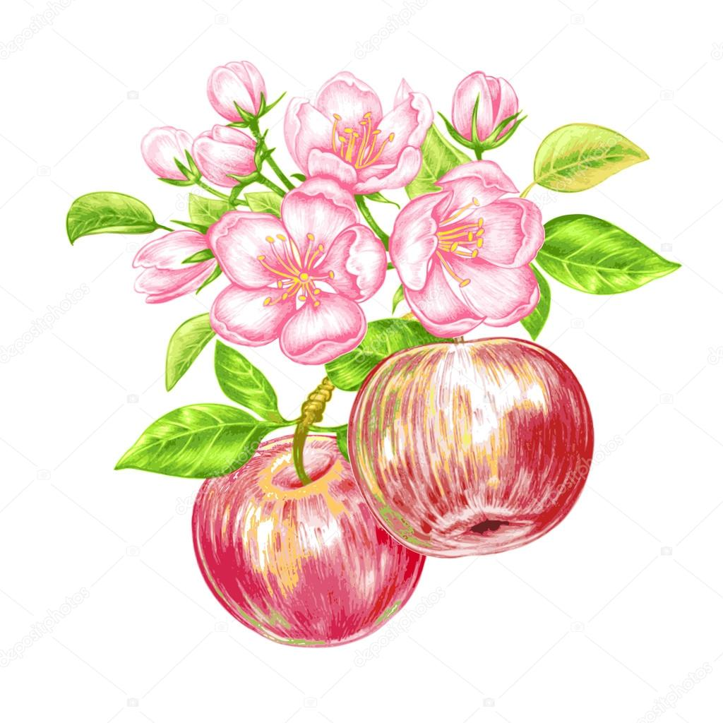 Vector seamless pattern with apple blossom.