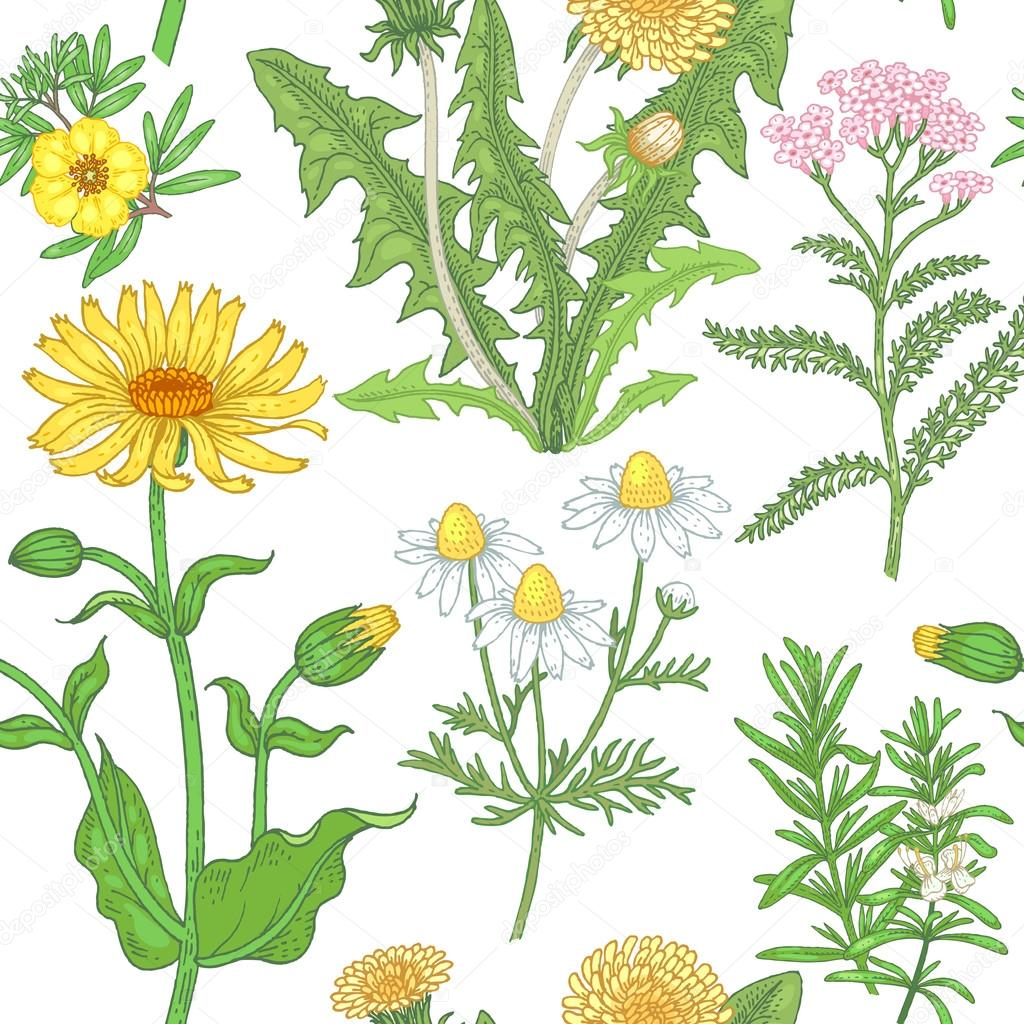 Seamless pattern with medical plants.
