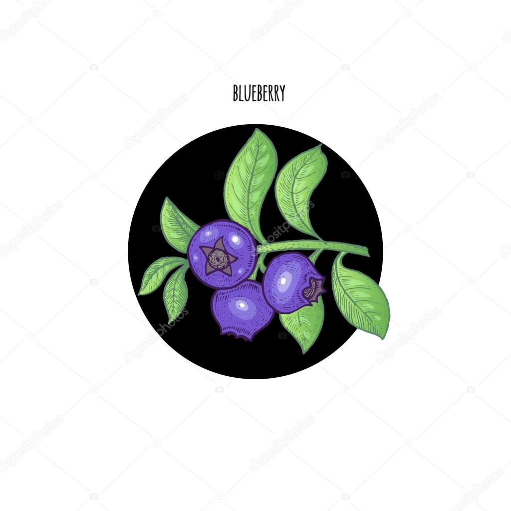 Colored vector illustration berry blueberries.