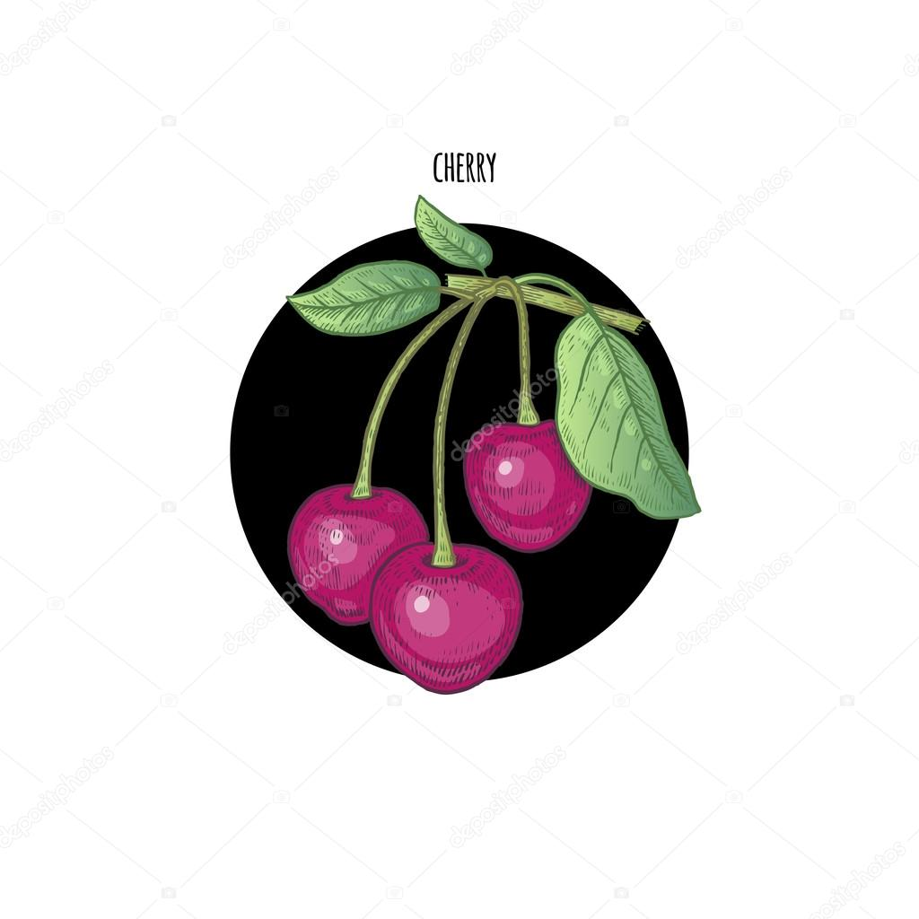 Colored vector illustration berry cherry.