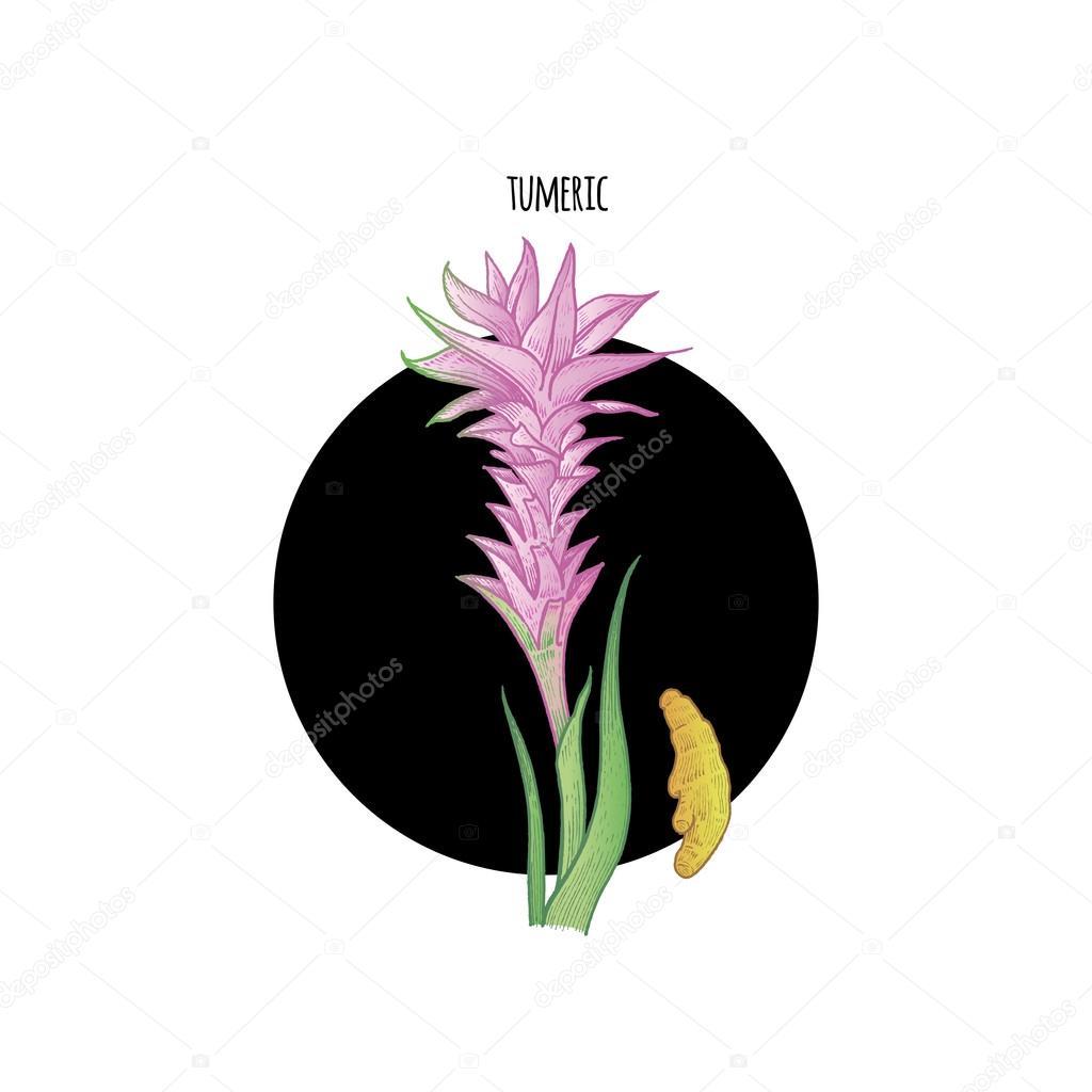 Image of plant Turmeric