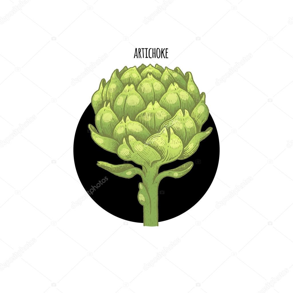 Image of plant Artichoke