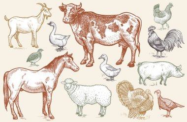 Goat, cow, horse, sheep, pig, goose, quail, duck, turkeys, roost