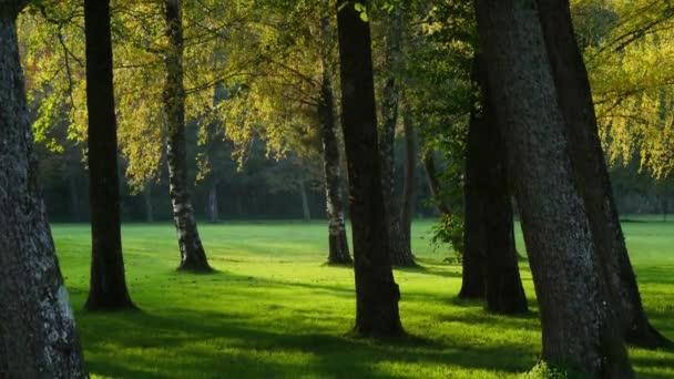 fák a parkban