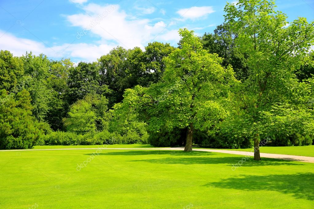 Natural background forest glade with trees in a beautiful park with natural background forest glade with trees in a beautiful park with blue sky and light clouds voltagebd Image collections