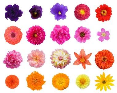Set 20 flowers
