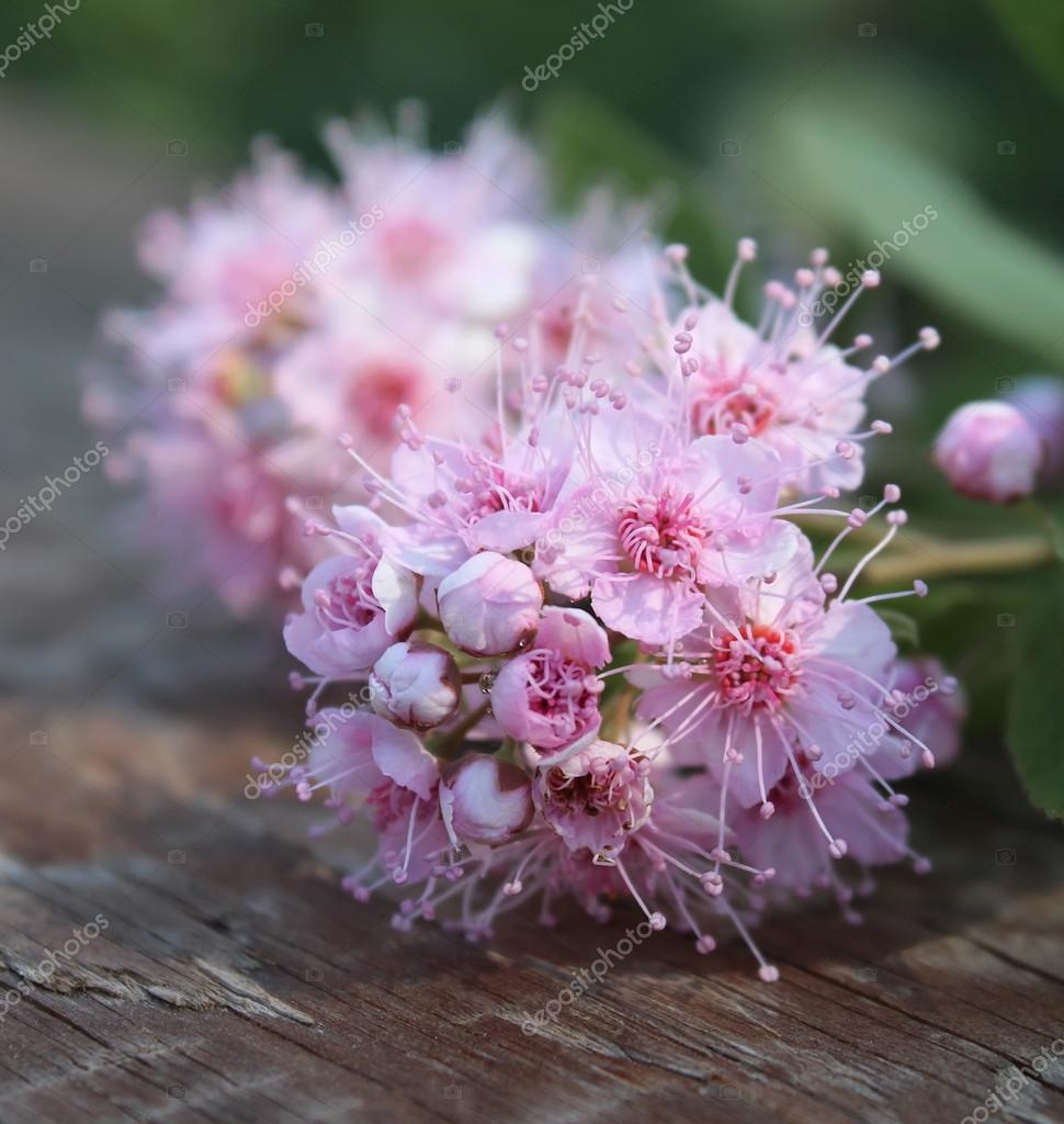 Wild Meadow Pink Flowers On An Old Wooden Background Stock Photo