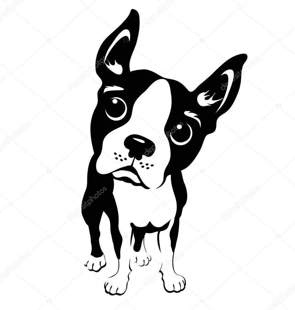 Ilustración blanco y negro de graciosos Boston Terrier — Vector de ...