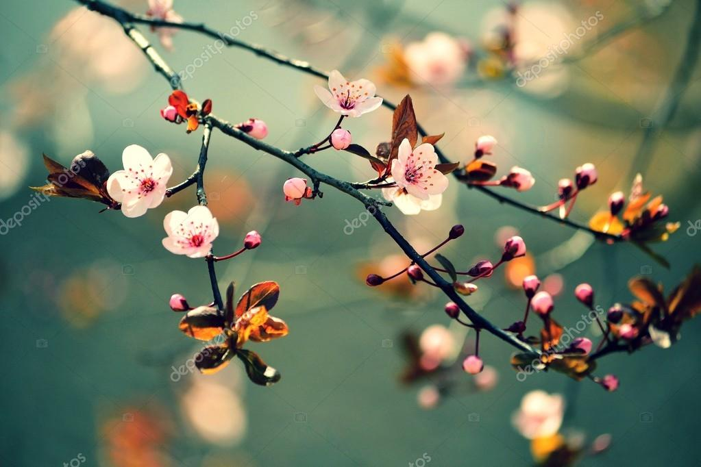 Весна Обои Стол