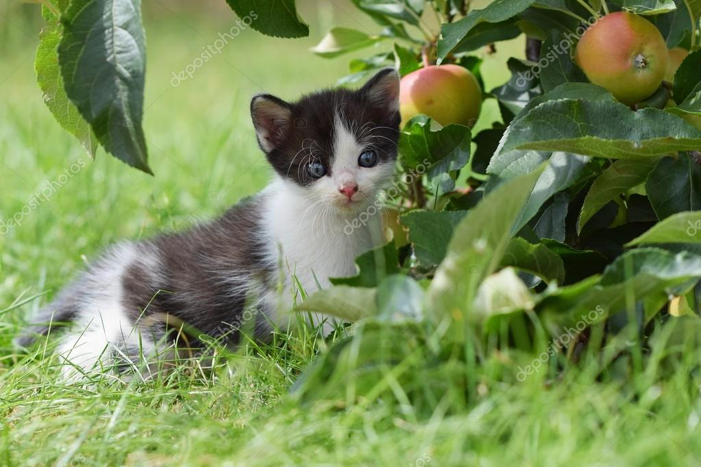 Beautiful small kitten with blue eyes.