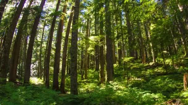 Oregon svěží lesní
