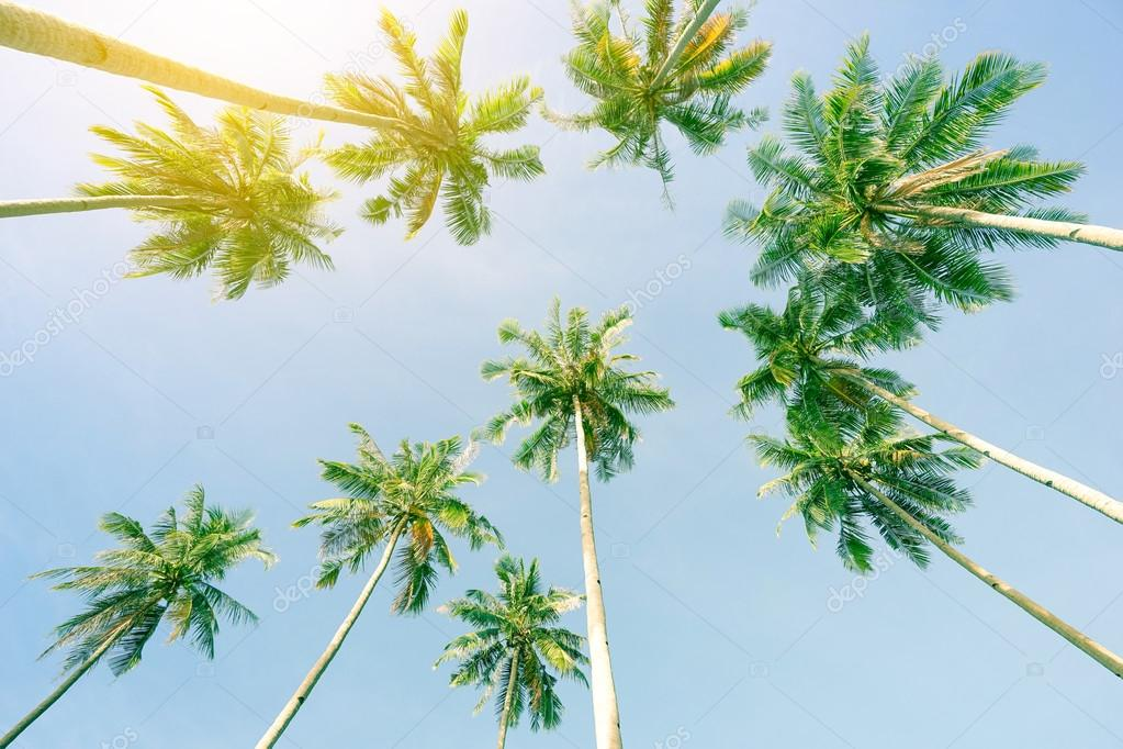 Perspective view of coconut palm trees and sky from the beach upside down - El Nido Palawan in Philippines - Wide angle view of exclusive destination theme in sunny day - Warm greenish vintage filter