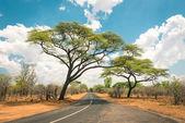 Africká krajina s prázdnou silnici a stromy v Zimbabwe - na cestě do Kazungula a na hranici s Botswanou podél Zambezi Drive - pojem dobrodružství v přírodě v Africe území