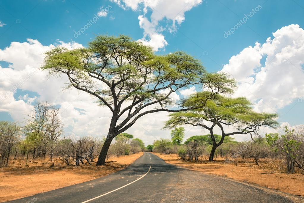 African landscape with empty road and trees in Zimbabwe - On the way to Kazungula and the border with Botswana along Zambezi Drive - Concept of adventure in the nature in Africa territory