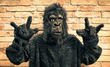Funny fake gorilla with rock and roll hand gesture - Hipster concept of anthropomorphic evolution of modern monkey