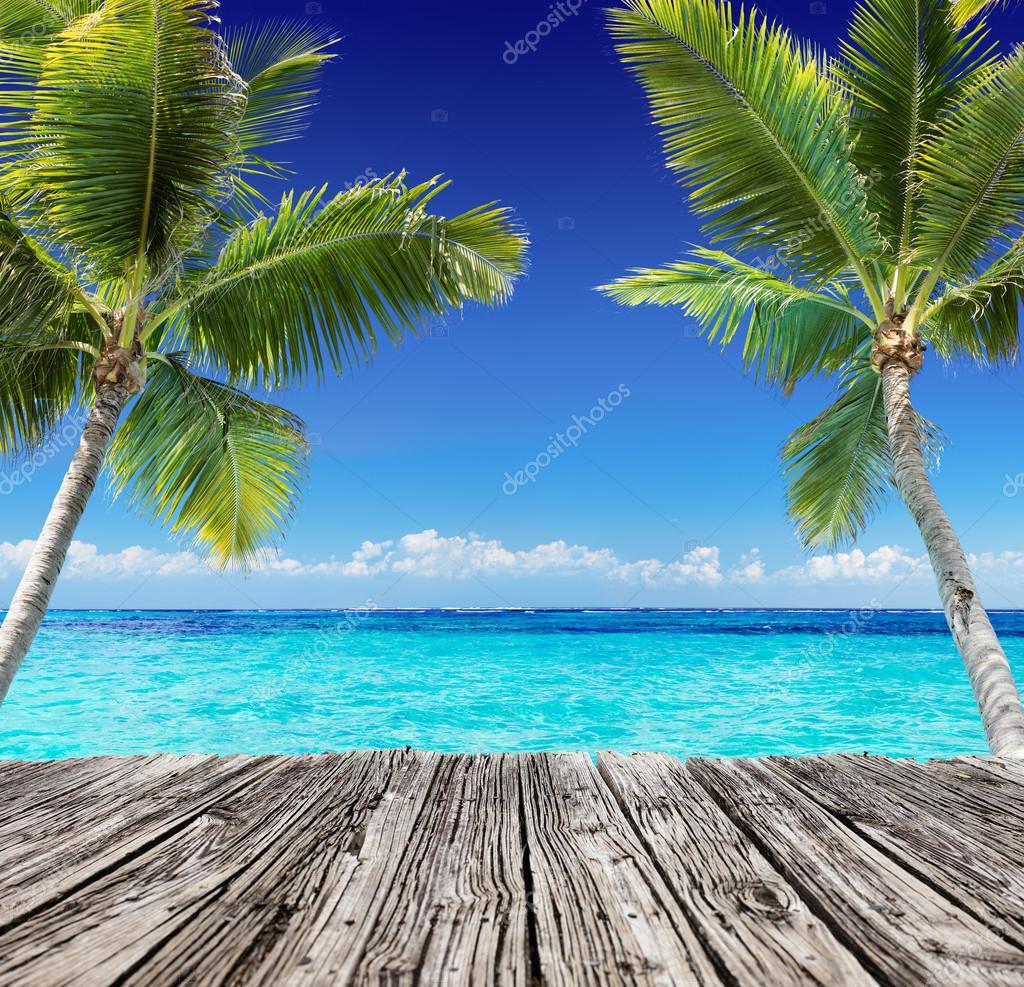 Vista Sul Mare Tropicale Con Plancia Di Legno E Palme Sulloceano