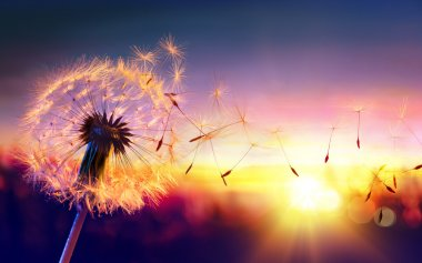 Dandelion To Sunset - Freedom to Wish stock vector