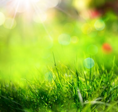 Green grass background with sunlight and blurs