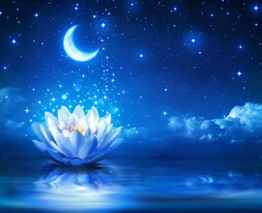 Waterlily and moon in starry night - magic background