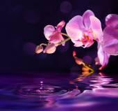 Fialové orchideje a kapky ve vodě